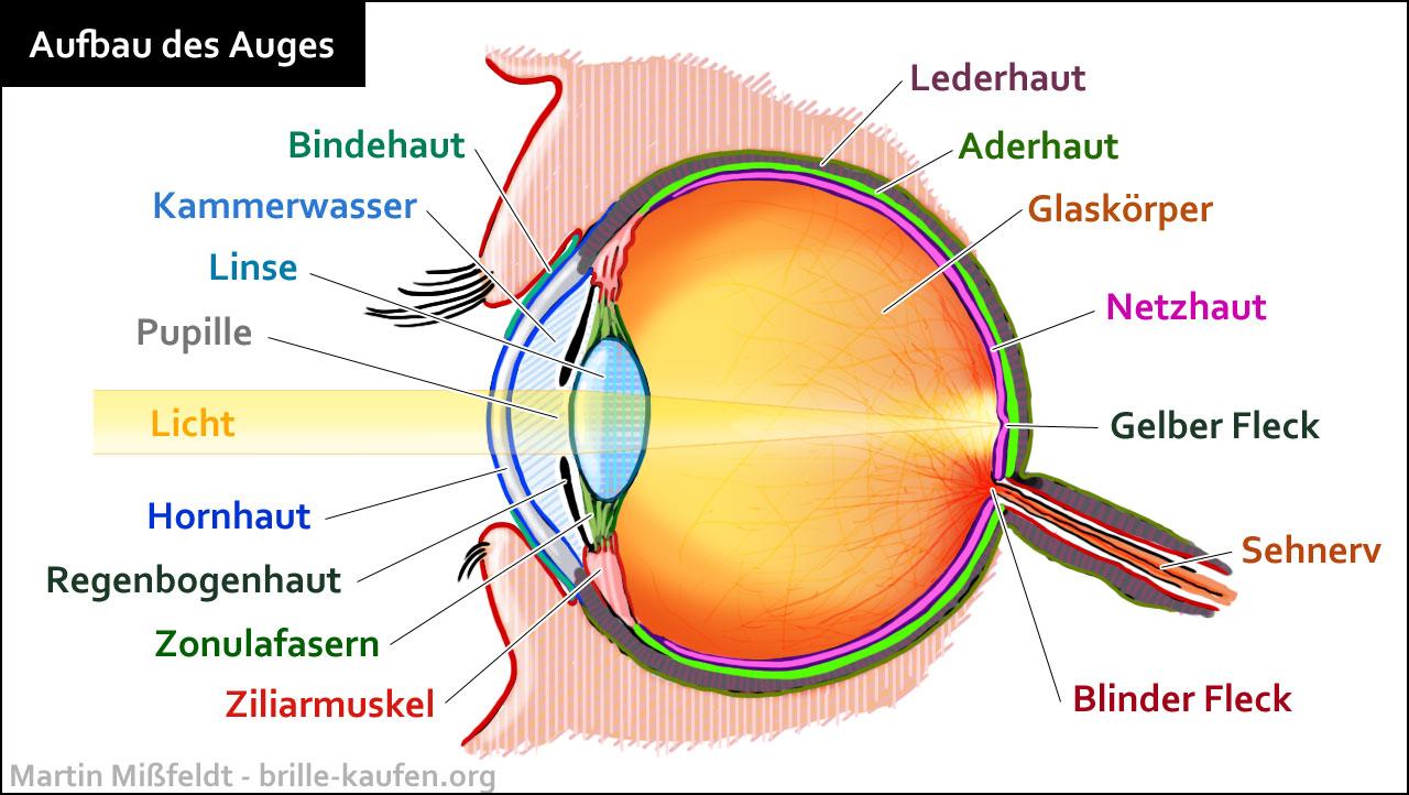 Auge Für Auge