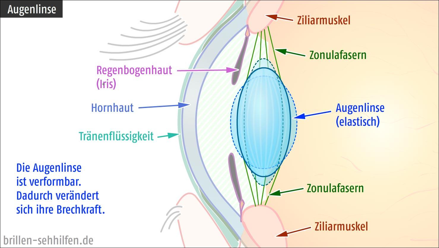 Akkommodation (Auge)