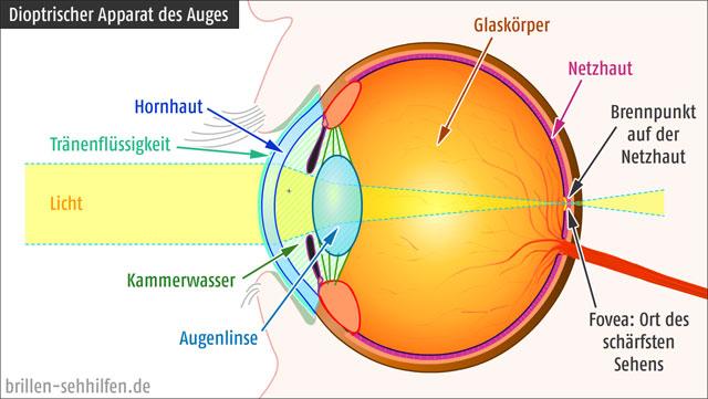 Dioptrische Apparat des menschlichen Auges