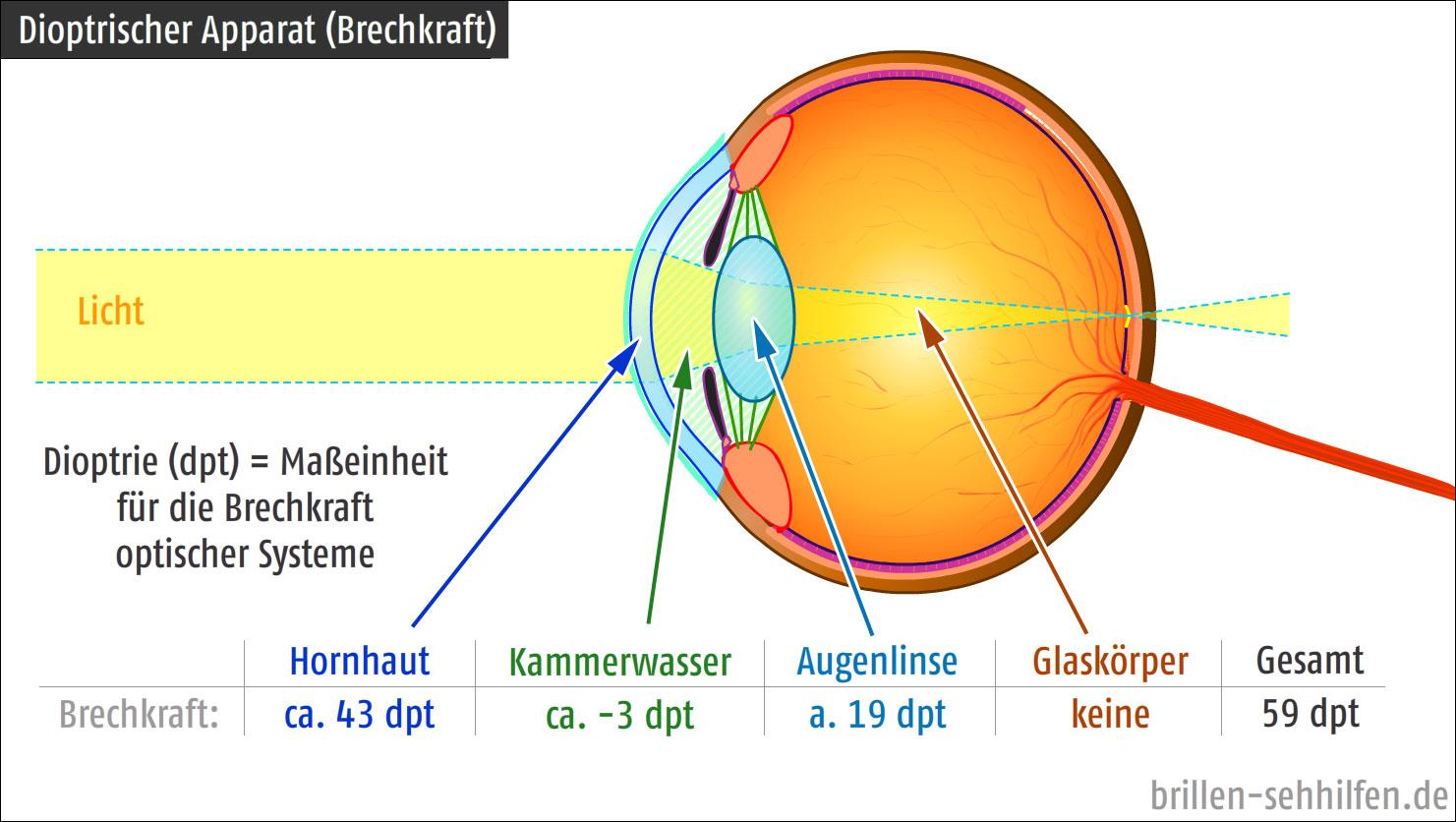 Die roten Kreise unter den Augen bei der Erkältung