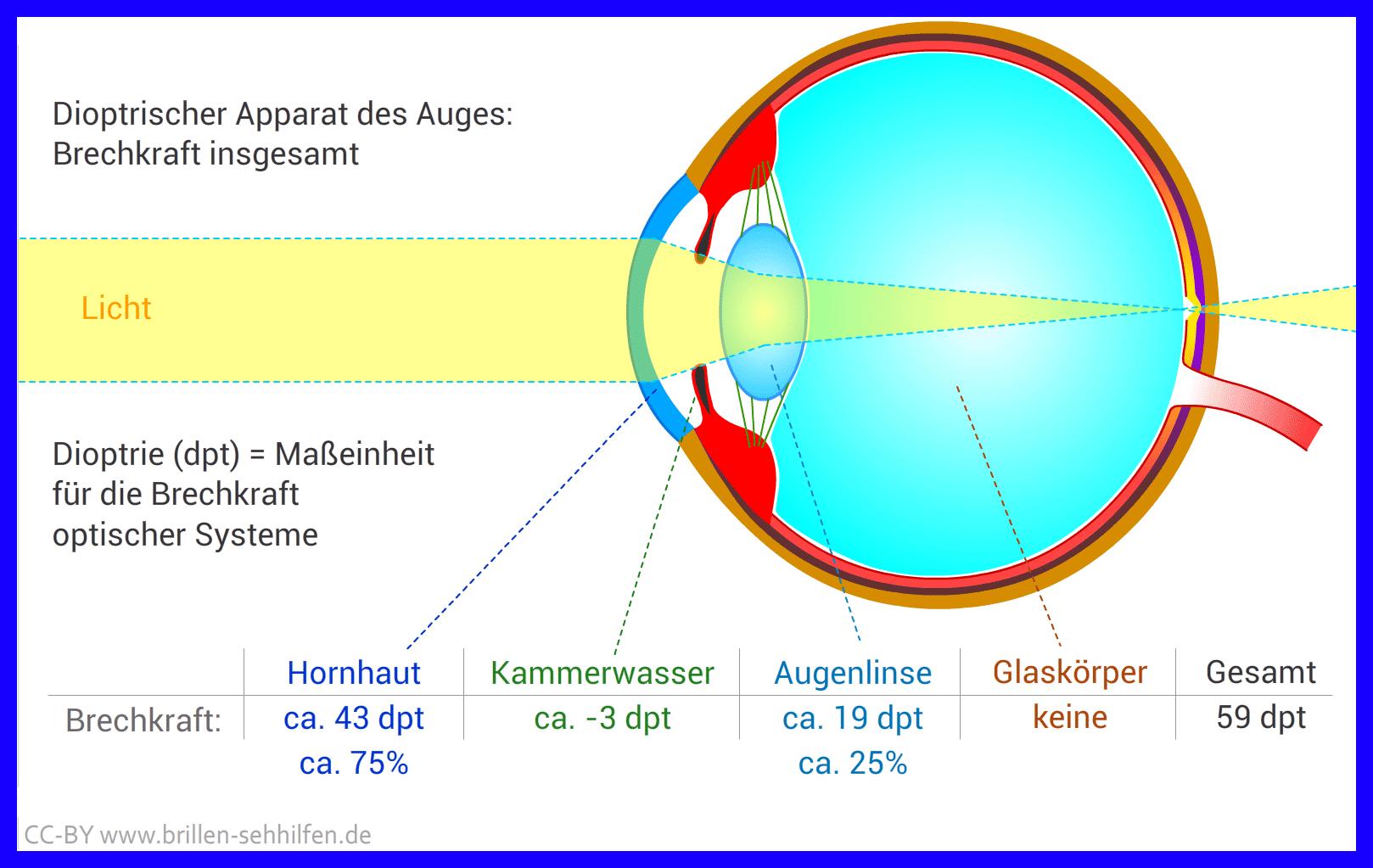 Menschliches Auge: Aufbau und Funktion