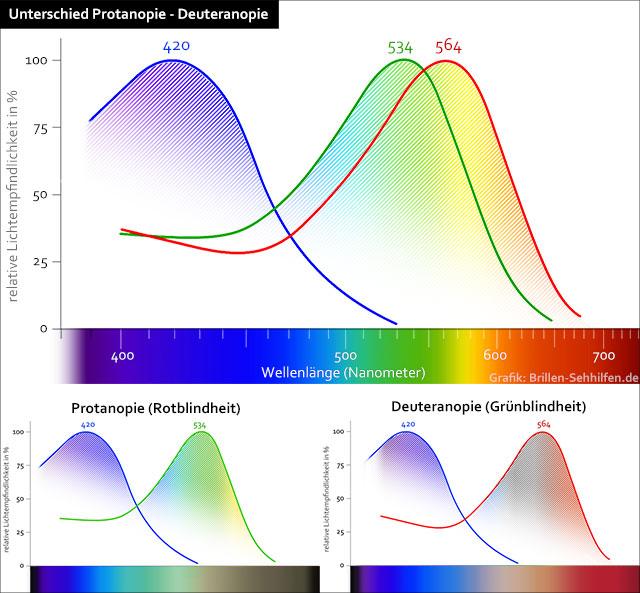 Unterschied Deuteranomalie (Grünsehschwäche) und Protanomalie (Rotsehschwäche)