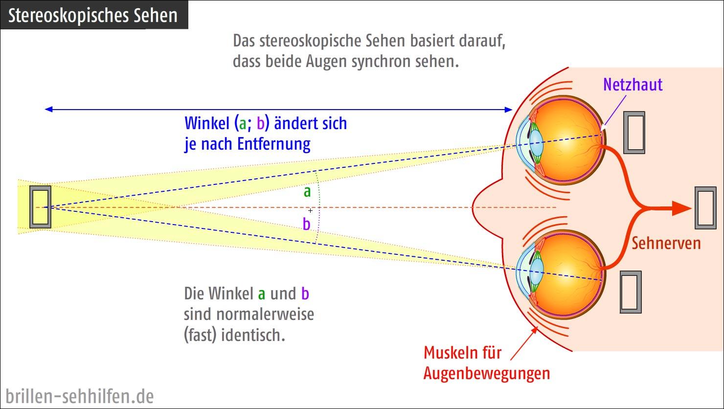 Nett Auge Anatomie Und Funktion Fotos - Menschliche Anatomie Bilder ...