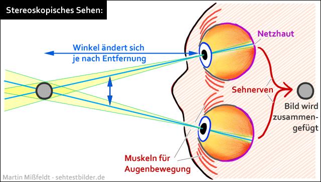 stereoskopisches-sehen.png